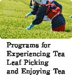 Programs forExperiencing Tea Leaf Picking and Enjoying Tea