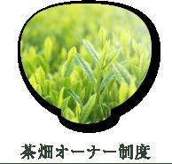 茶畑オーナー制度